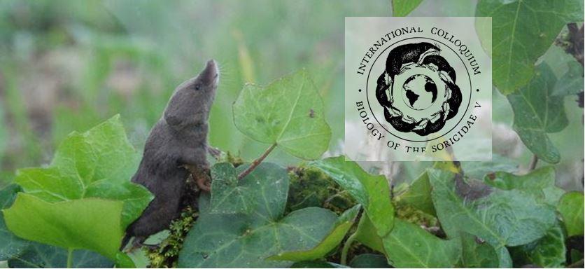 5-й Международный коллоквиум «Биология Сорицид (Soricidae)» перенесен на неопределённый срок